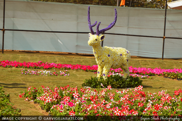 Ahmedabad Flower show