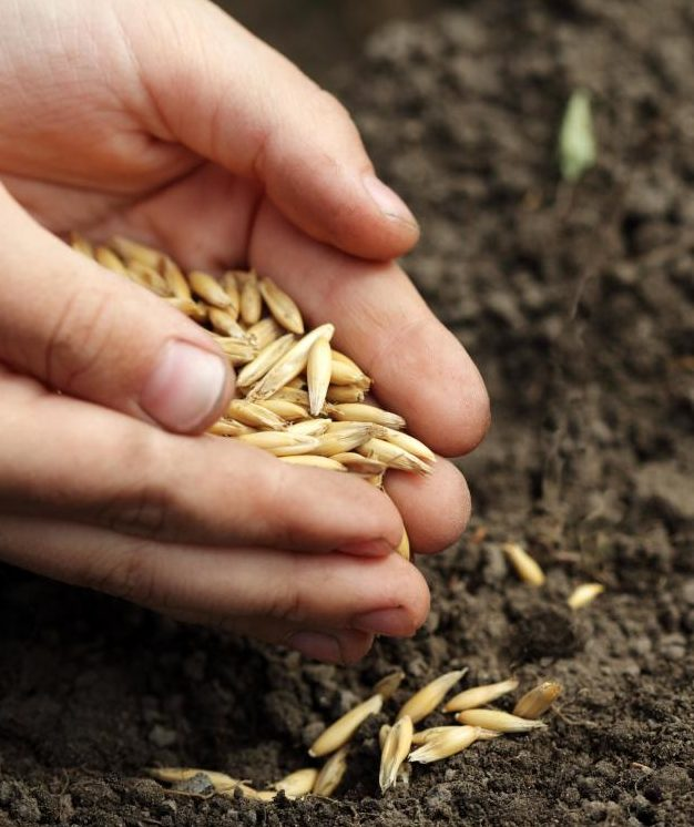 planting seeds of 9 different types of food grains navratri