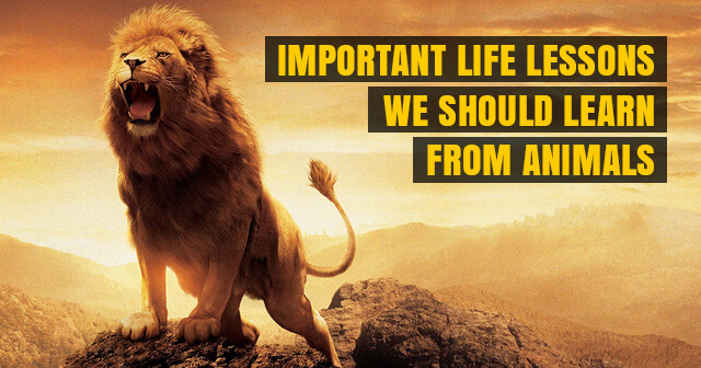 8 Important Life Lessons That We Should Learn From Animals | Must Read